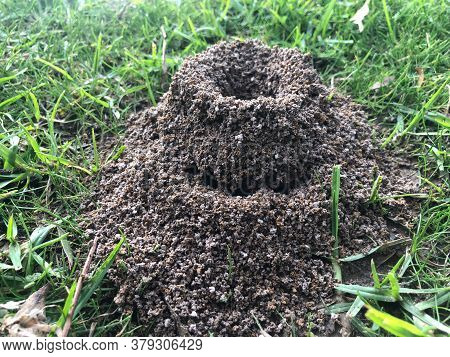 Anthill In The Grass - Extreme Closeup