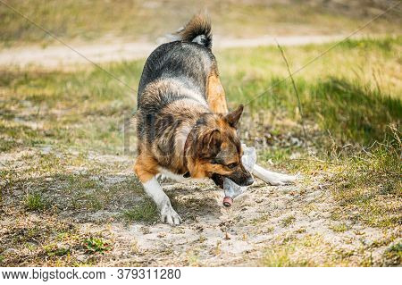 Mixed Breed Dog Playing With Plastic Bottle, Rubbish In Forest.