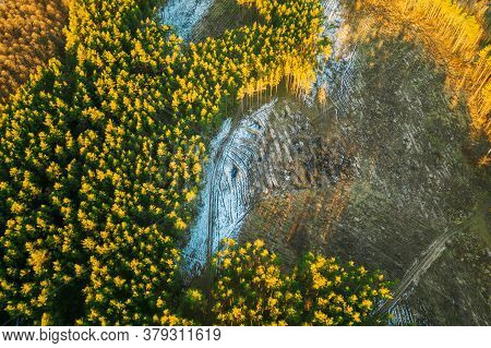 Aerial View Of Coniferous Trees Green Forest In Landscape At Early Spring. Pine Forest In Deforestat
