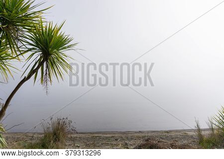 New Zealand Cabbage Tree Growing In Mist And Wetland Against Grey Hazy Sky