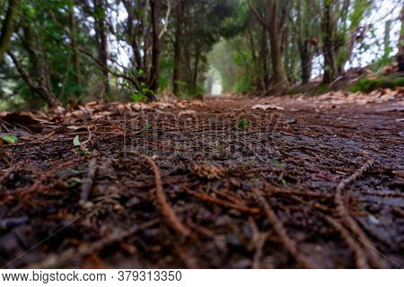 Walking Track Around Lake Okareka From Ground Level Perspective Differential Focus