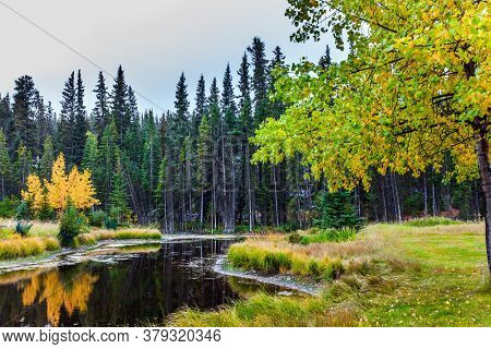Small forest lake. Canada, Banff. Cool and Wet Early Autumn. Green spruce and yellowed aspens. Concept of active, eco-friendly and photo-tourism
