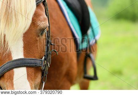 The Eye Of The Saddled Horse, The Close-up.