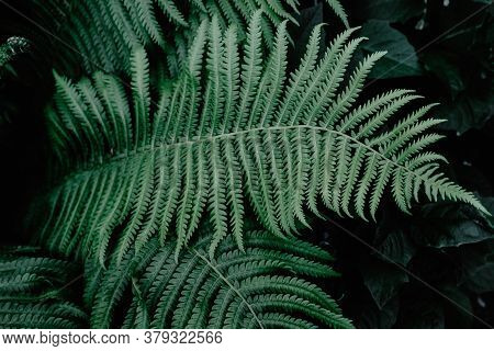 Beautyful Ferns Leaves Green Foliage Natural Floral Fern Background In Sunlight