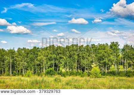 Birch Grove And Blue Cloudy Sky In Summer