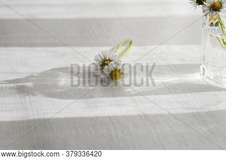 Daisy Flower On White Background With Copy Space/ Closeup And Macro Nature Details