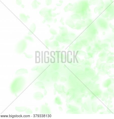 Green Flower Petals Falling Down. Amazing Romantic Flowers Gradient. Flying Petal On White Square Ba