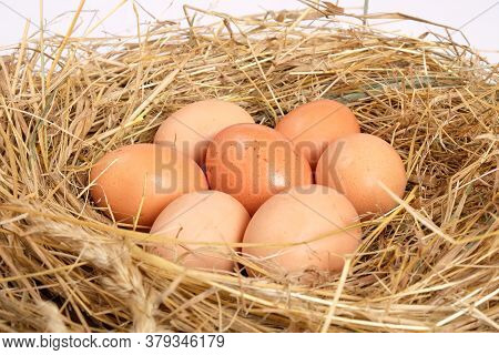 Homemade, Chicken Eggs In The Hay, Farming. Organic Healthy Food, Nest With Brown Eggs.