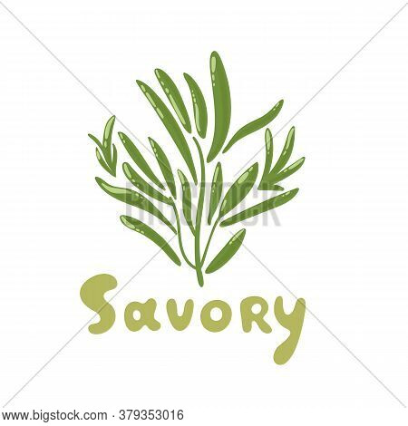 Savory Herb Cartoon Vector Illustration. Savory Color Icon For Food Ingredients. De Provence Eco Her