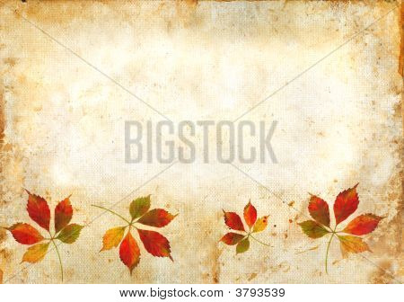 Fall Leaves On A Grunge Background