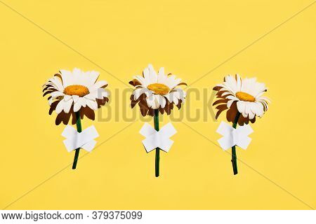 Three Daisy Flowers Taped On Wall On Yellow Background. Creative Concept
