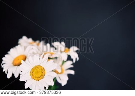 White Daisies Flower Bouquet On Dark Background With Copy Space
