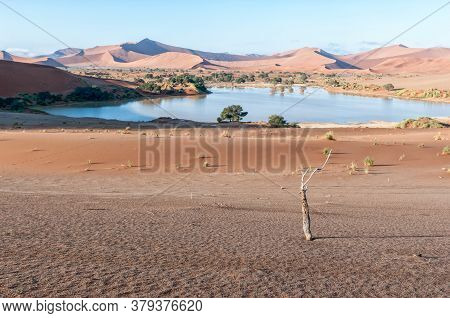 View Accross Sossusvlei, Filled With Water, Towards Deadvlei. Big Daddy Dune Is Visible
