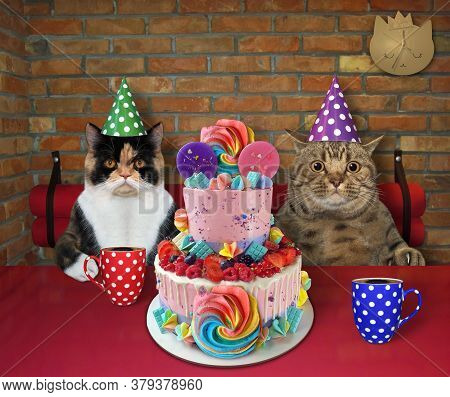 The Couple Of Cat In Party Hats Are Eating A Holiday Two Tiered Cake And Drinking Black Coffee At A