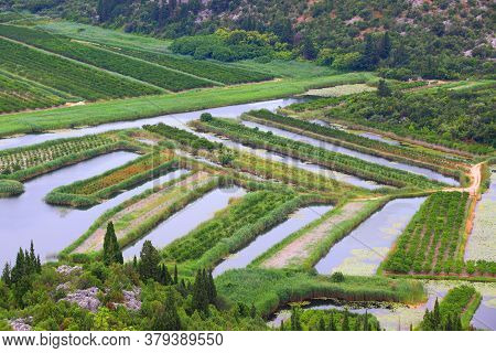 Agriculture In Croatia. Neretva Delta Agricultural Landscape, Croatia. Fruit Orchards And Irrigation