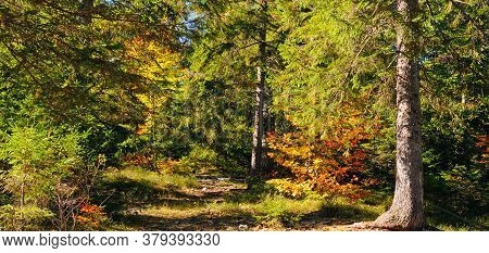 Autumn Forest Scenery With Rays Of Warm Light Illumining The Gold Foliage And A Footpath Leading Int