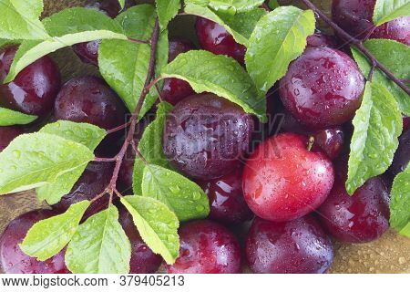 Fresh Plums With Leaves And Water Drops, Macro Photo. Texture Background Of Fresh Red Plums. Copy Sp