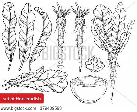 Vector Set Of Outline Horseradish Plant With Leaf, Root And Chrain Sauce In Black Isolated On White