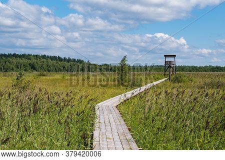 Birdwatching Tower And Footbridge Across The Swamp At Bolshom Rakovom (big Crayfish) Lake. Eco Route