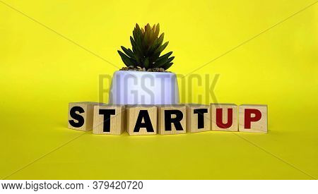Start Up On Wooden Cubes, A Pot With A Flower On A Yellow Background.photo For Business.