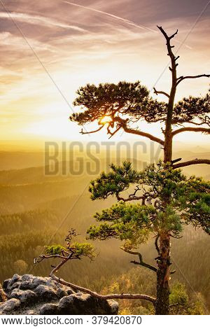 Last Tree On Exposed Cliff Cliff In Mountains In Foggy Weather. Amazing Autumn Sunse.