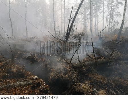 Peatlands Are On Fire. Forest Fire And Its Consequences. Smoke Black Earth Burnt. Burnt Tree Trunks