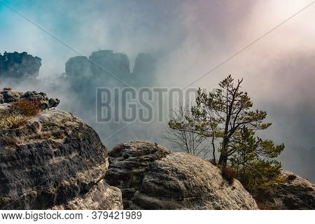 Cruelly Tested Pine Tree On The Exposed Mountainside. Fog Descends To The Mountain