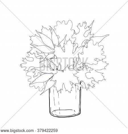Oak Leaves, Maple Leaves Bouquet Autumn Season In Jar Monochrome Hand Drawn Ink Sketch Art Design St