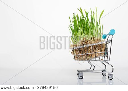 A Small Toy Cart From The Supermarket Is Carrying A Superfood Green Microgreen. Healthy Vitamin Nutr