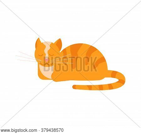 The Ginger Cat Lies With Its Paws Tucked And Purrs. Square Card With Funny Kitten In Flat Design. Ha