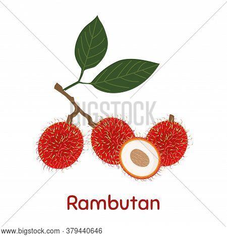 Rambutan Fruit. Vector Illustration Eps. Illustration On White Background