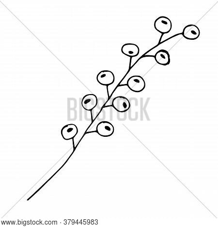Sketch Branch Of Leaves By Hand On An Isolated Background. Hand Drawn Branches With Leaves And Flowe