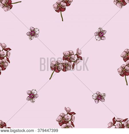 Seamless Pattern With Hand Drawn Colored Phalaenopsis Stock Illustration