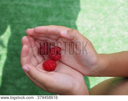 Raspberry Berry In The Childs Palm In Nature