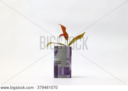 Rolled Banknote Money Ten Thousand Indonesia Rupiah And Young Plant Grow Up With White Background. C