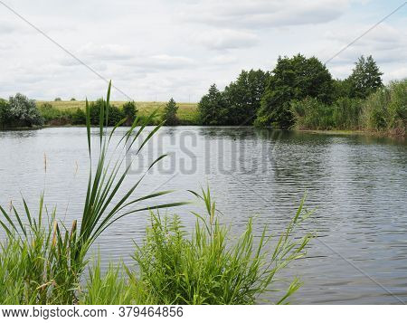 Beautiful Blue Lake With Green Reeds. Landscape On The Lake.