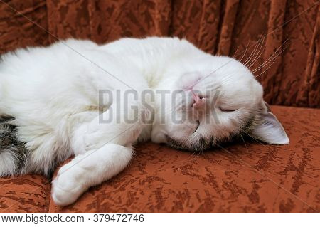 A White Cat Is Napping On A Red Sofa.