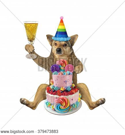 The Beige Dog In A Birthday Hat With A Glass Of Wine Is Sitting Near A Two Tiered Cake. White Backgr