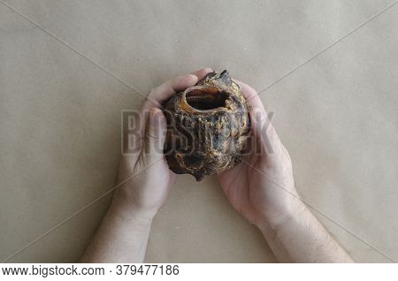 An Adult Caucasian Man's Hand Holds A Dried Beef Larynx. Natural Dried Dental Treats For Pets. Encou