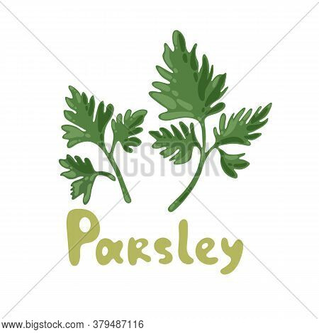 Parsley Icon On White Background. Sprig Of Parsley With Bright Green Aromatic Leaves. Natural Ingred