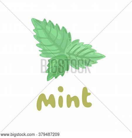 Mint Icon. Culinary Herb. Cartoon Fresh Mint Leaves On White Background. Mint Vector Clipart Illustr
