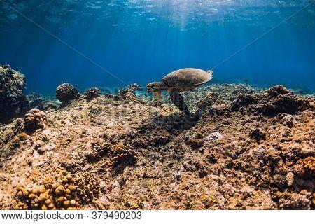 Sea Turtle Glides Underwater In Transparent Ocean.