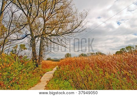 Walkway Into A Marsh Land