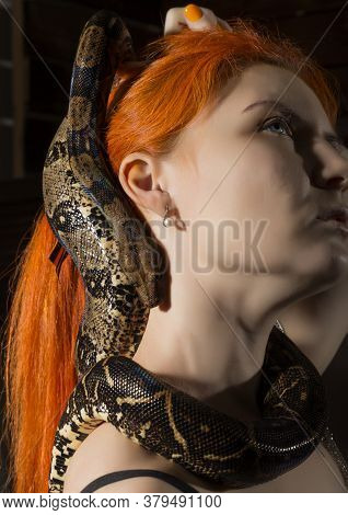 Redhead Woman Holding Snake. Close-up Photo Girl With Pygmy Python On A White Background