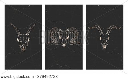 Vector Set Of Three Illustrations With Gold Skulls Goats, Ram And Grunge Elements On Black Backgroun
