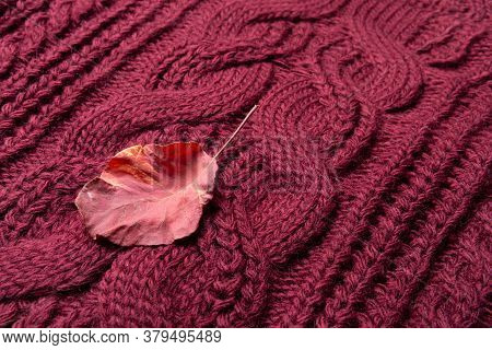 Burgundy Dry Leaf Lies On Burgundy Knitted Fabric, Concept Of Winter