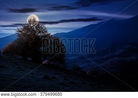 Autumnal Rural Landscape At Night. Beautiful Countryside In Mountains. Trees In Fall Foliage On Gree