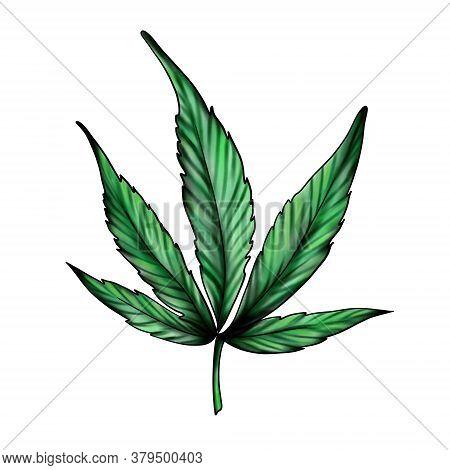 Cannabis Leaf Isolated On A White Background. Green Marijuana. Ganga, Hemp