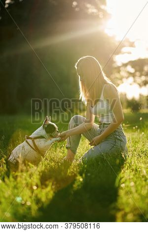 Side View Of Purebred Smart Pet Giving Paw To Female Dog Owner, Beautiful Summer Sunset On Backgroun