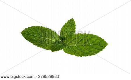 Close Up One Fresh Green Mint Veaves Branch Isolated On White Background, Elevated Top View, Directl